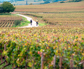 /doc/photos/photos/bourgogne/cropped_veloroute-vers-santenay_-photo-alain-doire_bourgogne-tourisme.jpg